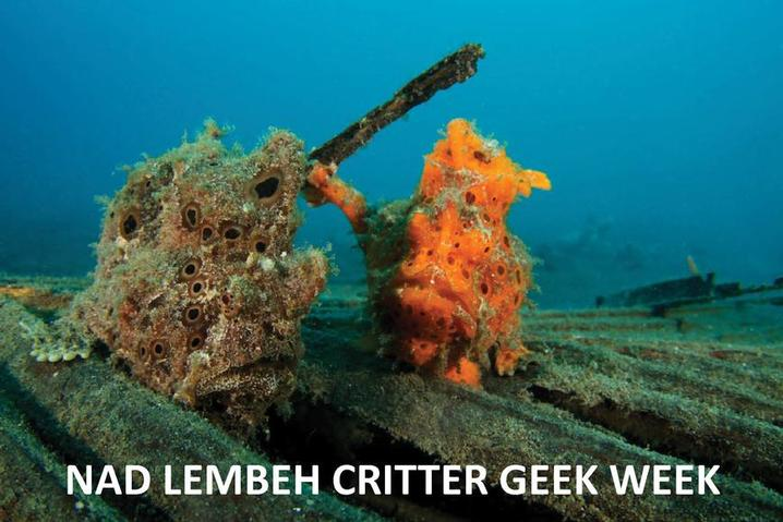 NEWS!  Divequest have teamed with NAD Lembeh to offer an amazing Critter Geek Week in September 2016.  Featuring a welcome dinner, critter quizzes and a wide range of photographic workshops click here for more information....